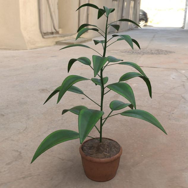 DF_Plant1.jpg