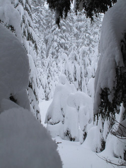 Skiing the trees