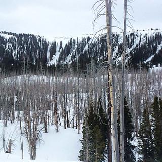 Tree Skiing of all varieties
