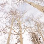Aspen and Sky
