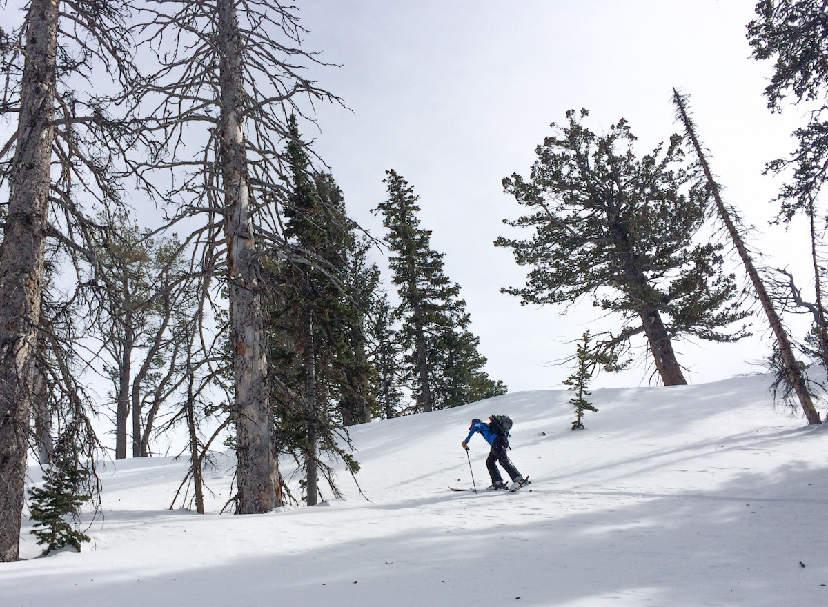 Skinning through the pines