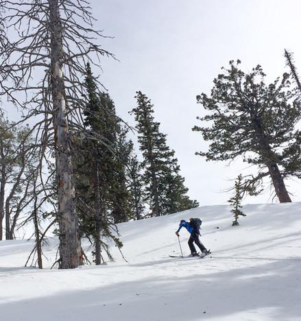 Skinning through the pines