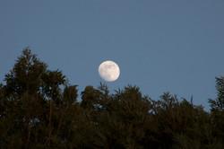 Reiki, lune