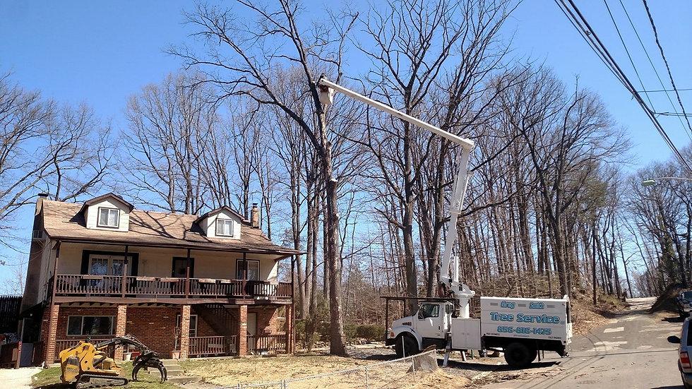 tree-removals.jpg