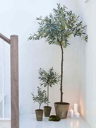 Lene Bjere Olive tree small