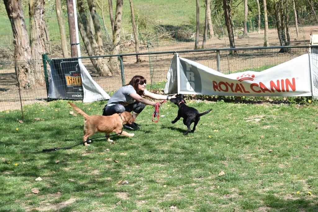 1 maître, 2 chiens !
