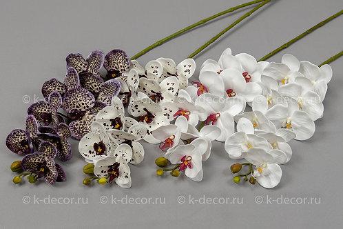 Орхидея Флорида Премиум