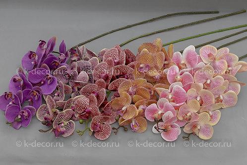 Орхидея Карибы