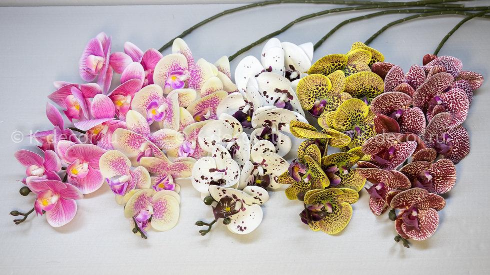 Орхидея Силикон Флорида