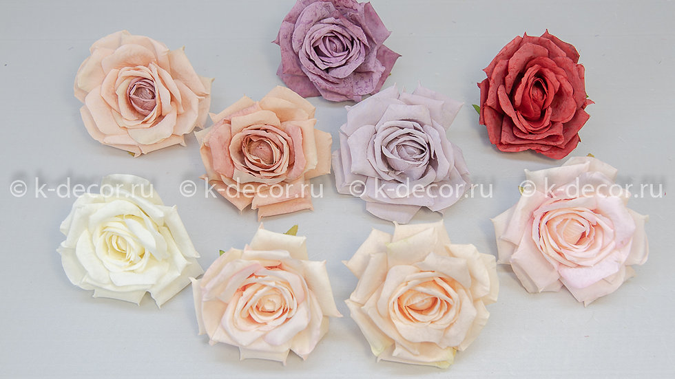 Голова роза Роберта БИГ