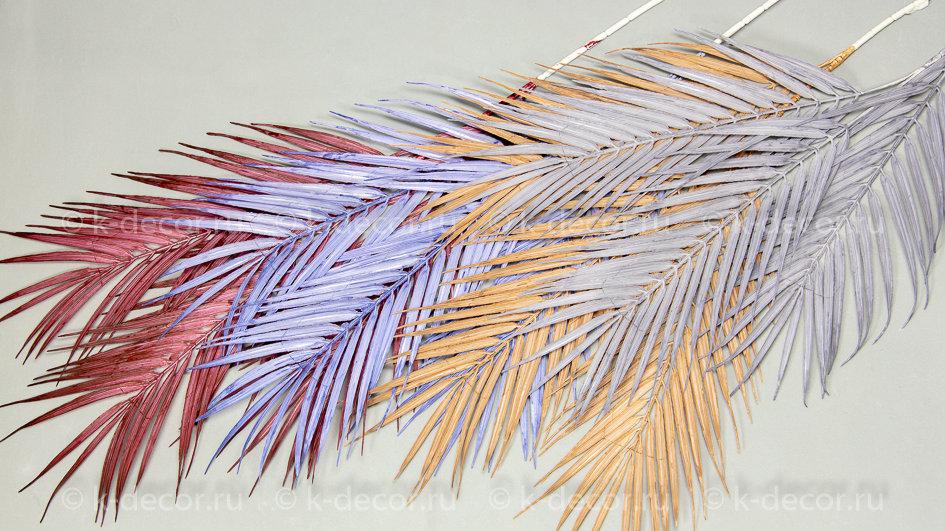 Ветка пальма Сочинка