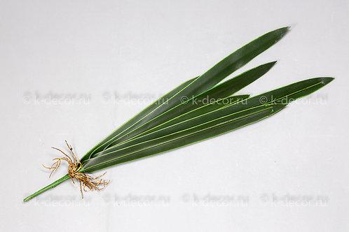 Лист орхидеи БИГ