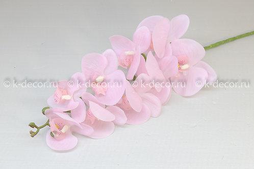 Ветка орхидея Вентура