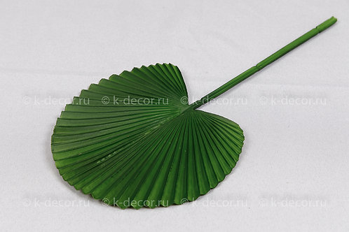 Пальма веер