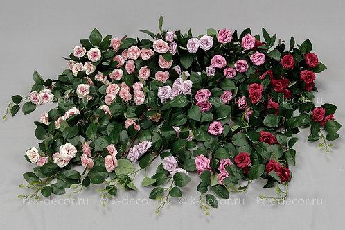 Куст ампельный роза Феерия
