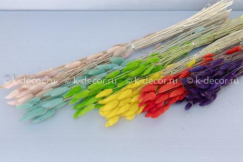 Лагурус импортный цветной