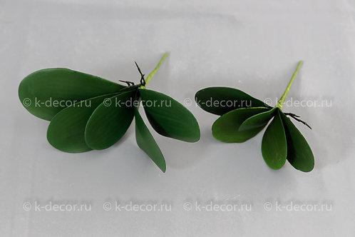 Листья орхидеи с корнем