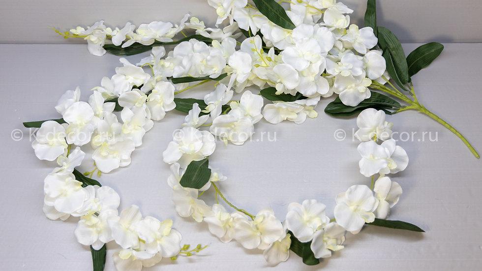 Куст орхидеи ампельной