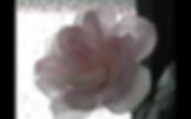 Screen Shot 2019-04-08 at 5.03.06 PM.png
