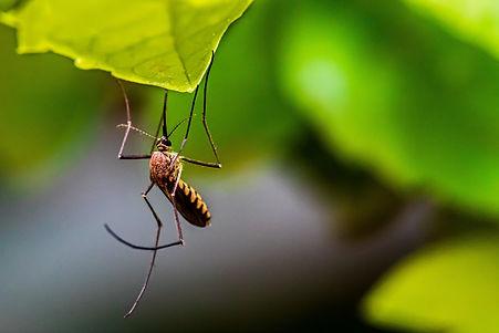 הדברת יתושים - מקק הדברות