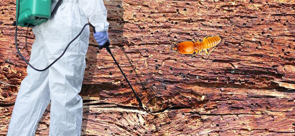 madbir termitim2.jpg