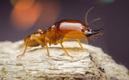 florida-termite-pest-guide_edited.jpg
