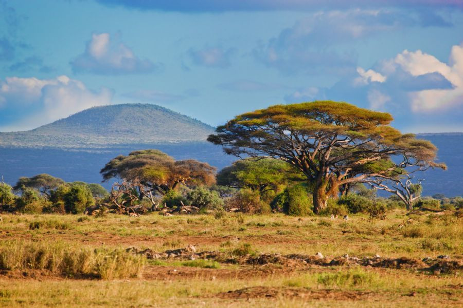 Image result for beauty of africa