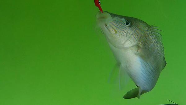 pwc fishing florida