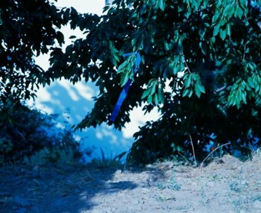 S/Título#18, Untitled #18, Portugal Série: Variações para um fruto