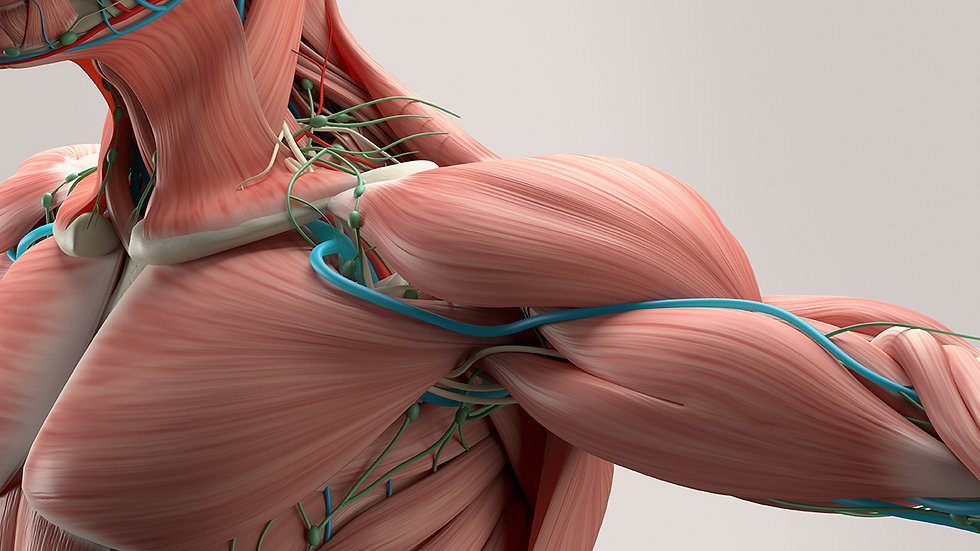 VTCT level 3 Award Anatomy and physiology Knowledge in Body Systems
