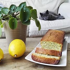 cake citron pavot.png