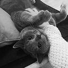 [Cat] of my life _#catstagram #catofmyli