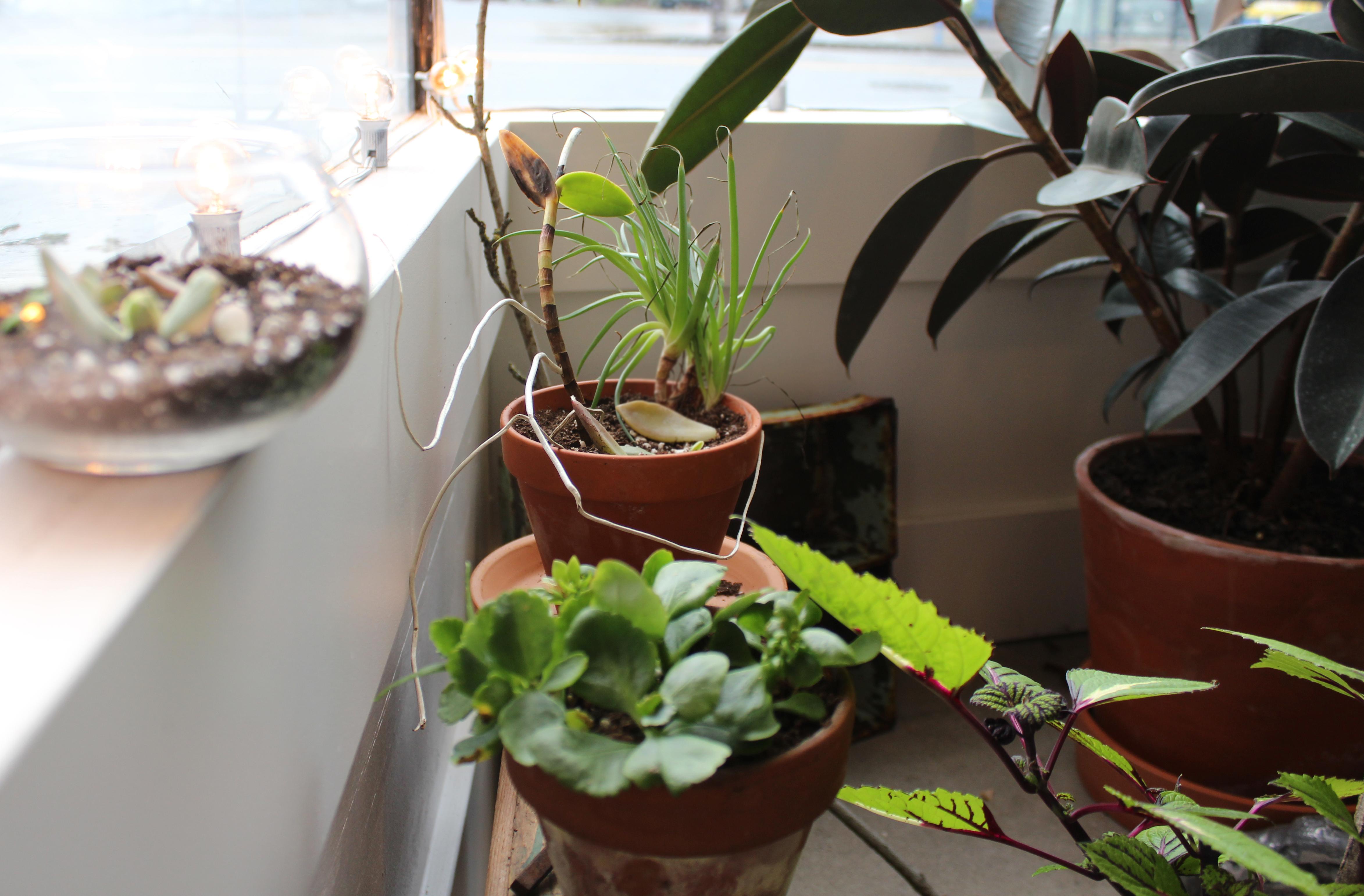 3 plants.jpg