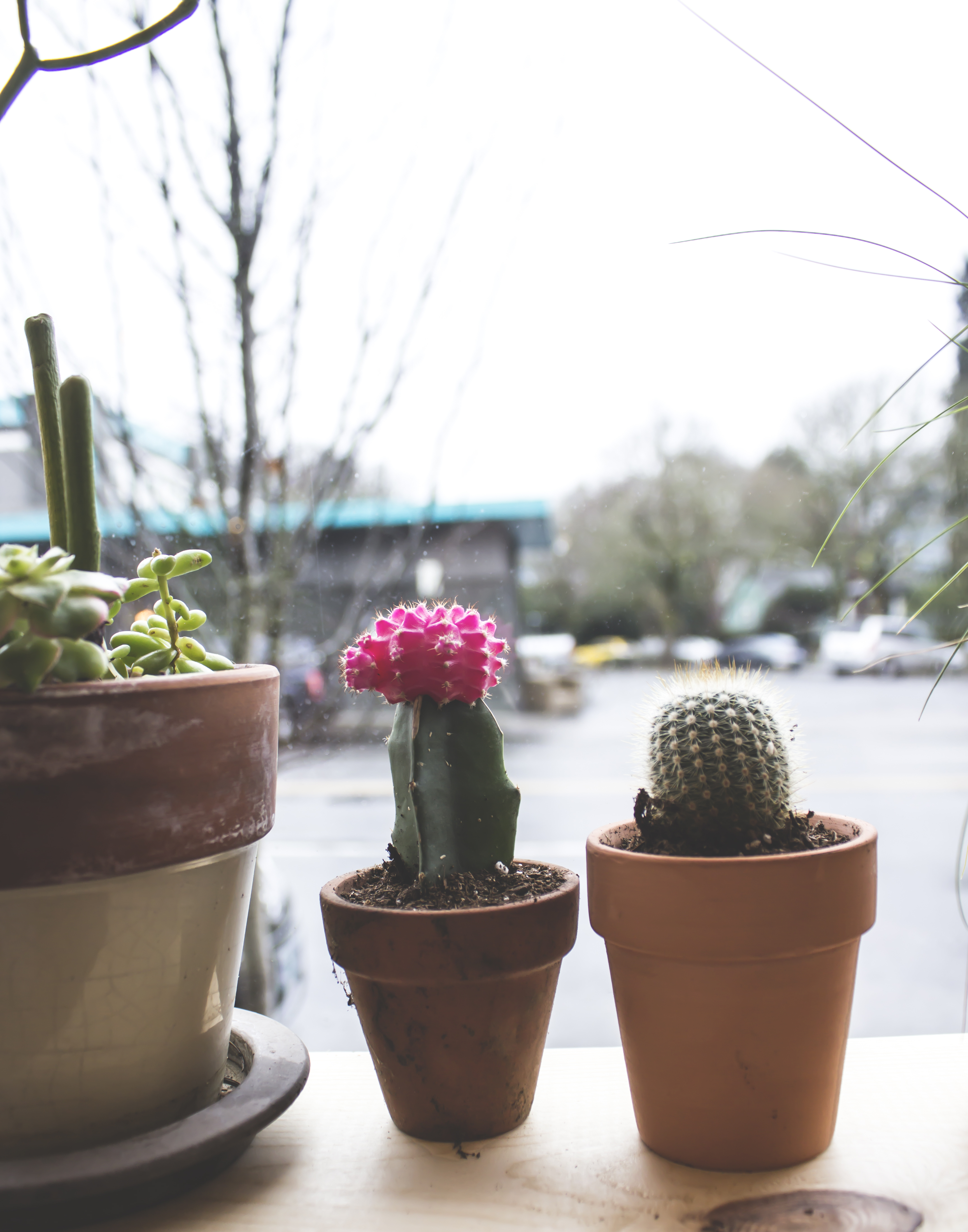 5 plants.jpg