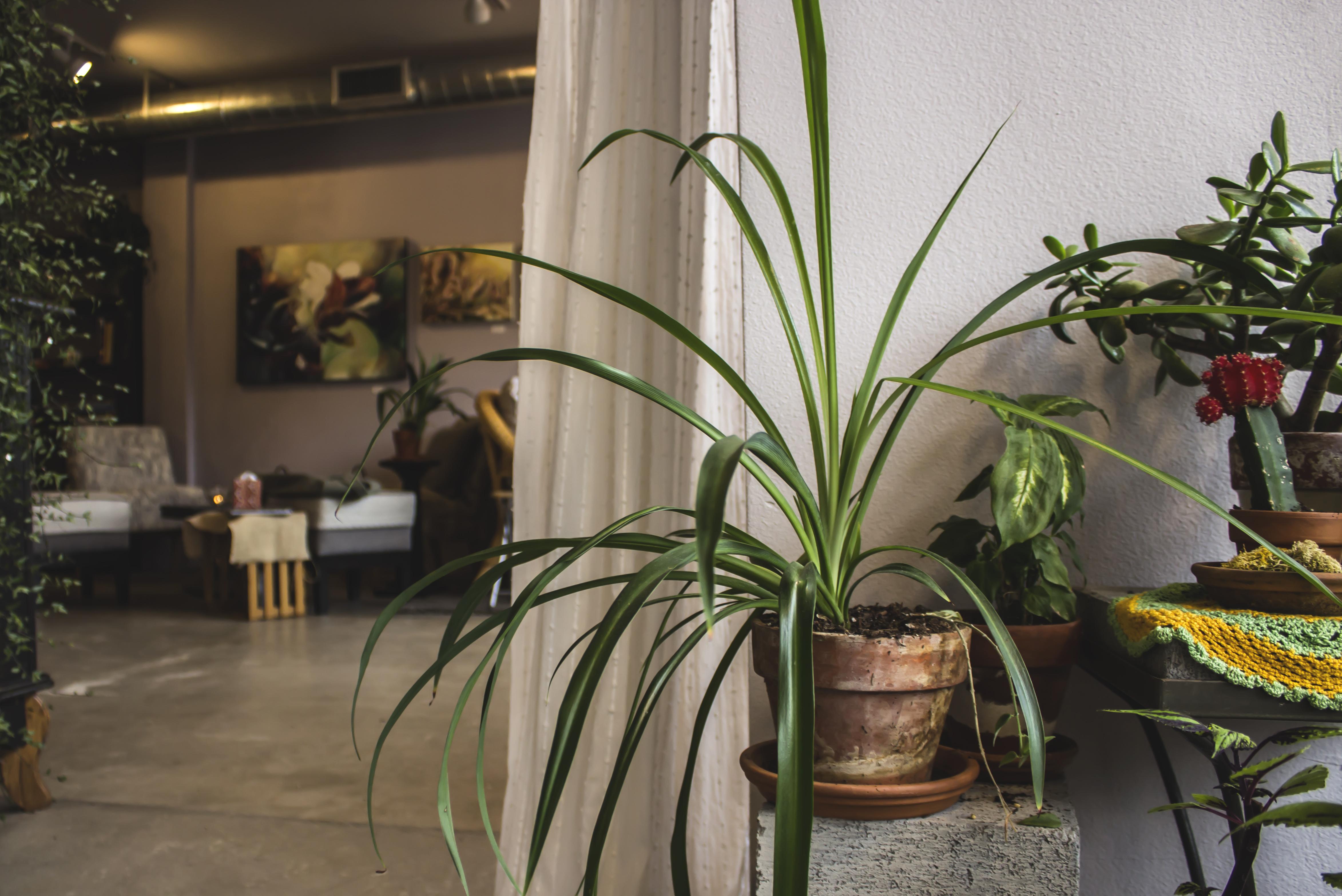 18 plants hallway.jpg