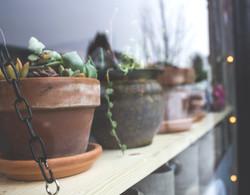 7 plants from outside.jpg