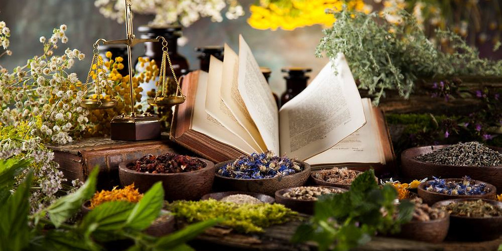 Plant Study & Meditation