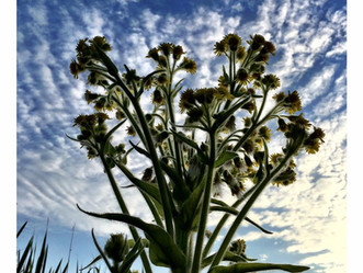 Sluit je aan bij de nieuwe werkgroep: biodiversiteit, natuur & landschap