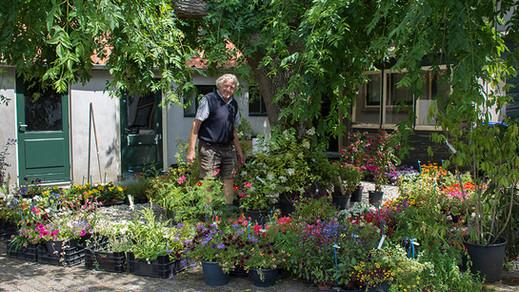 Biologische groentes planten in augustus en september