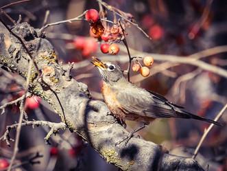 Meedoen aan citizen science dit weekend: geef de meest getelde vogel in je tuin of balkon door