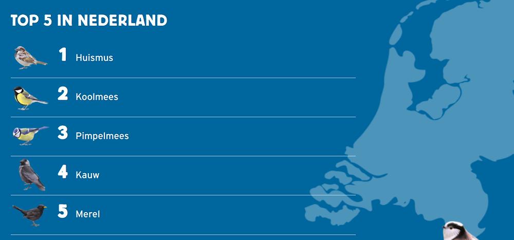 Top 5 tuinvogels in Nederland. Op 1 de huismus, 2 koolmees, op 3 de pimpelmees, op 4 de kauw, nummer 5 is de merel.