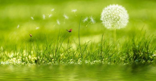 Planten aan de waterkant en een vlinder.
