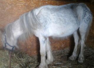 Pony Rescue - CAUTION: graphic photos