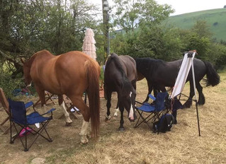 Psychodynamic Equine Assisted Trauma Therapy (PEATT)intensive training with Ilka Parent
