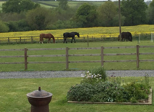 My experience of Equine Therapy - A client's story