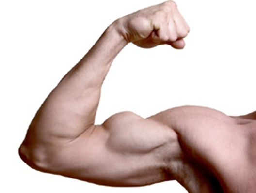 arm-muscle-278x225.jpeg