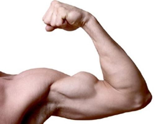 arm-muscle-278x225_edited.jpg