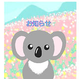 koala_icon_%E3%81%8A%E7%9F%A5%E3%82%89%E