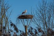 Storch  Storchensiedlung Horst 7 Steinma