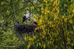 Storch H6 Storchensiedlung  05